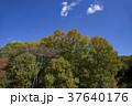 自然 風景 樹木の写真 37640176