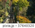 紅葉 高尾山 ケーブルカーの写真 37640320