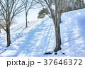 雪景色 雪 積雪の写真 37646372
