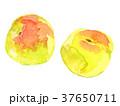 梅 実 水彩のイラスト 37650711