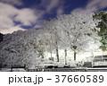 雪 積雪 公園の写真 37660589
