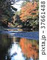 伊勢神宮内宮 五十鈴川御手洗場から上流を見る 37661488