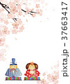 ひな祭り 背景 水彩画 37663417