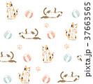 動物 動物学 猫のイラスト 37663565