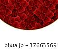 バラ 背景素材 花のイラスト 37663569