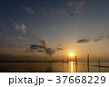 千葉県 江川海岸の夕暮れ 37668229