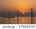 千葉県 江川海岸 電柱の写真 37668240