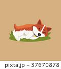 コーギー 緑の芝生 おねむのイラスト 37670878