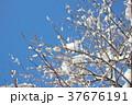 雪景色 37676191