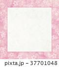 桜 フレーム 枠のイラスト 37701048