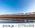春 桜 桜並木の写真 37701458