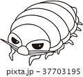 37703195