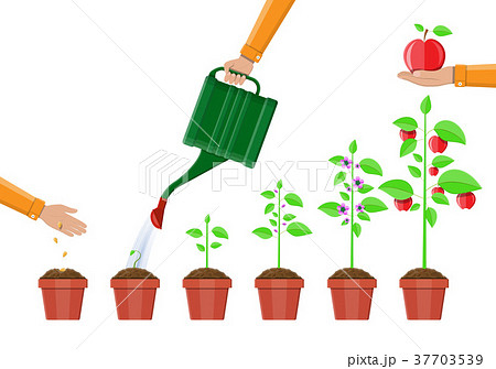 Growth of plant, from sprout to fruit. 37703539