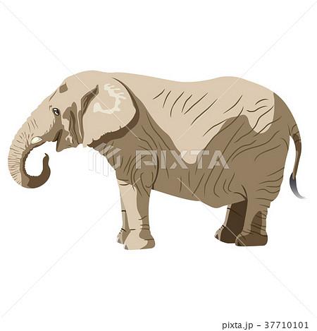 象さんのイラスト素材 [37710101] , PIXTA