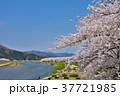 桜 桧木内川 角館の写真 37721985