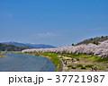 桜 桧木内川 角館の写真 37721987