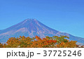 山 富士山 世界文化遺産の写真 37725246