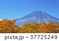 山 富士山 世界文化遺産の写真 37725249