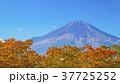 山 富士山 世界文化遺産の写真 37725252