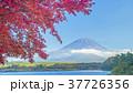 富士山 世界文化遺産 紅葉の写真 37726356