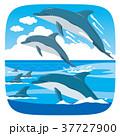 イルカの群れ 37727900
