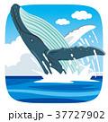ジャンプするクジラ 37727902