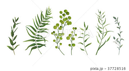 Vector elements set of green forest ferns, herbs 37728516