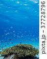 海中 珊瑚 サンゴの写真 37728796