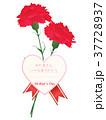 カーネーション メッセージカード 母の日のイラスト 37728937