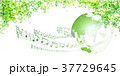 新緑(若葉) 37729645