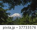 富士山 新緑 山の写真 37733576