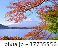 富士山 秋 紅葉の写真 37735556