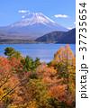 富士山 本栖湖 紅葉の写真 37735654