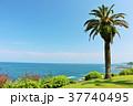 宮崎県 夏の青空とヤシの木 37740495