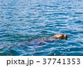 オタリア 37741353
