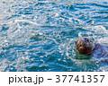 オタリア 37741357