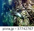 海 写真 37742767