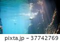 海 写真 37742769