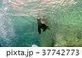 海 写真 37742773
