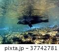 海 写真 37742781