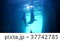 海 写真 37742785