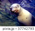 海 写真 37742793