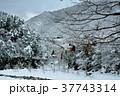 白川郷合掌集落からの雪景 37743314