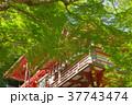 新緑の談山神社 37743474