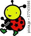 テントウ虫 37743986
