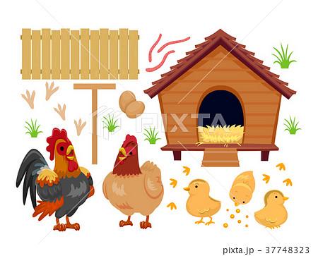 Chicken Coop Chicks Elements Illustration 37748323