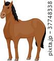馬 イラスト 挿絵のイラスト 37748338