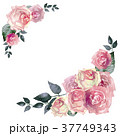 薔薇 花 水彩のイラスト 37749343