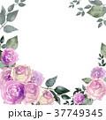 薔薇 花 ピンクのイラスト 37749345