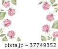薔薇 花 枠のイラスト 37749352